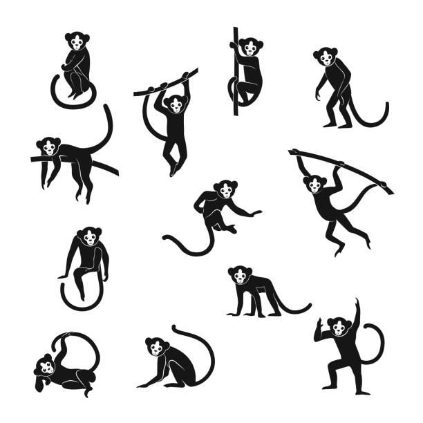 funny monkeys set - monkey stock illustrations