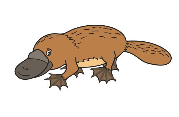 bildbanksillustrationer, clip art samt tecknat material och ikoner med rolig näbbdjuret. australiska - platypus