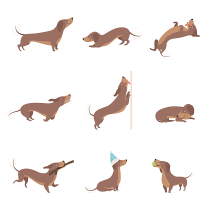 Funny playful purebred brown dachshund dog activities set vector Illustrations on a white background