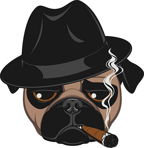 stockillustraties, clipart, cartoons en iconen met funny pug with cigar - guy with cigar