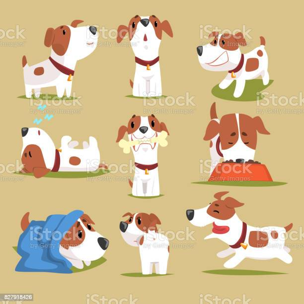 Funny puppy daily routine set cute little dog in his evereday vector id827918426?b=1&k=6&m=827918426&s=612x612&h=asb j83lfngjdbjkcg v4p5msescq0gb5e6 anvfahc=
