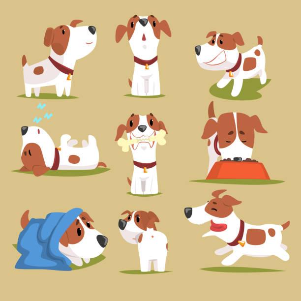ilustrações de stock, clip art, desenhos animados e ícones de funny puppy daily routine set, cute little dog in his evereday activity colorful character - happy dog