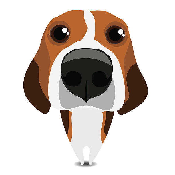 Best Beagle Illustrations, Royalty-Free Vector Graphics ...