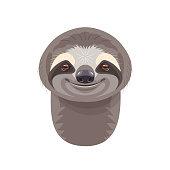 Funny Sloth Portrait on White