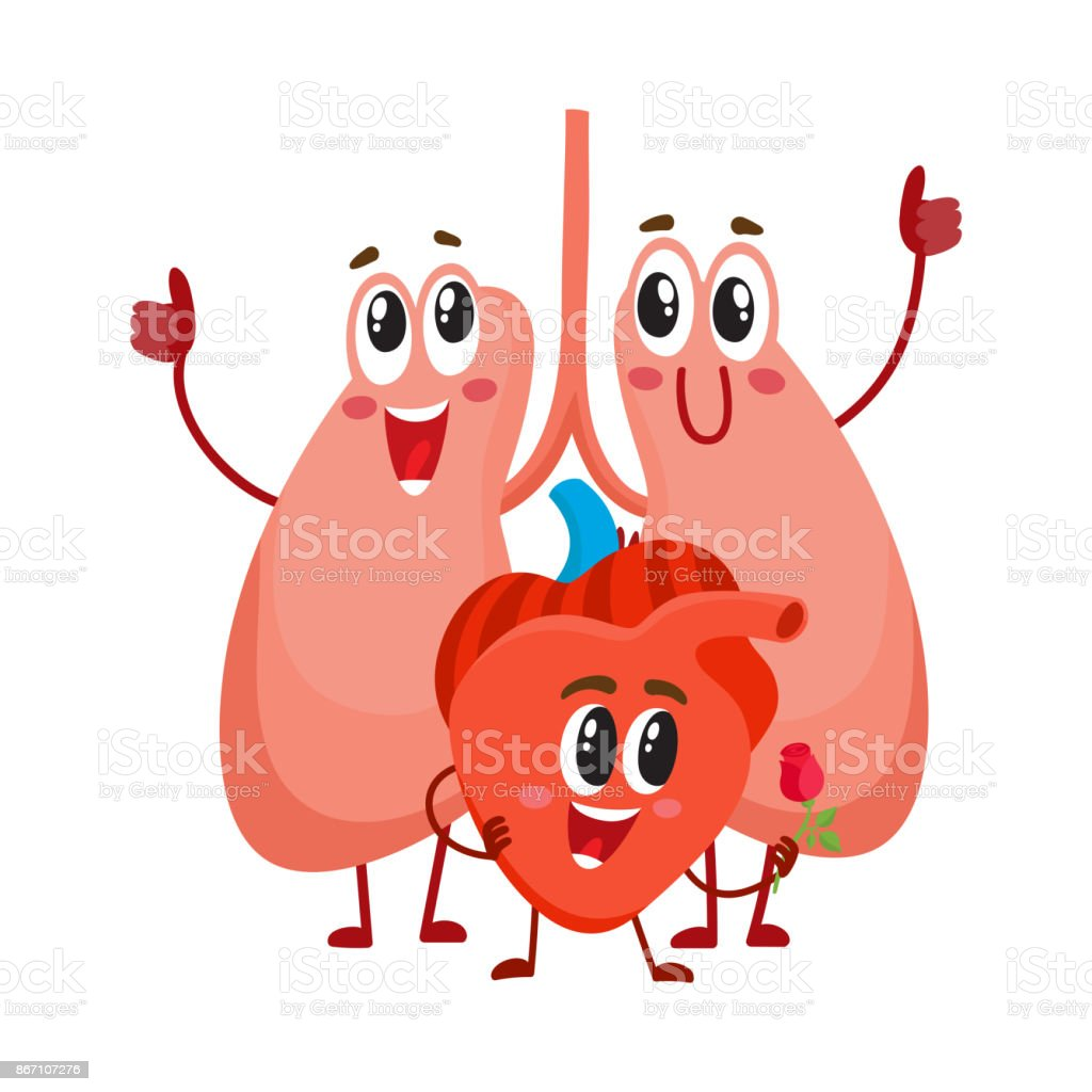 Funny Smiling Human Lungs And Heart Characters Chest Internal Organs ...