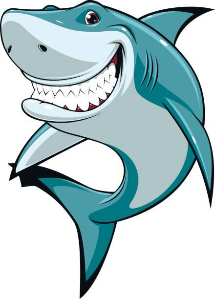 Funny white shark Vector illustration, funny toothy white shark, isolated on white background great white shark stock illustrations