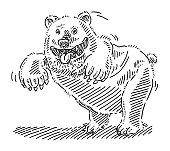 Funny Wild Bear Drawing