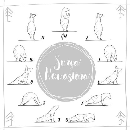 funny yoga with polar bear fitness white bears yoga poses