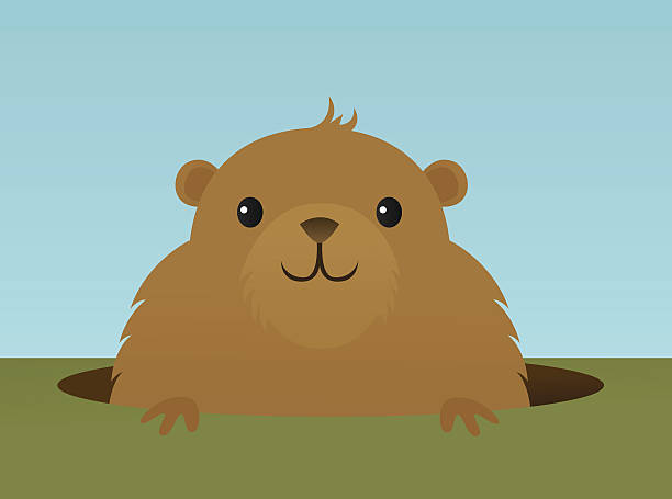 Furry brown groundhog peeks out of hole in the ground vector art illustration
