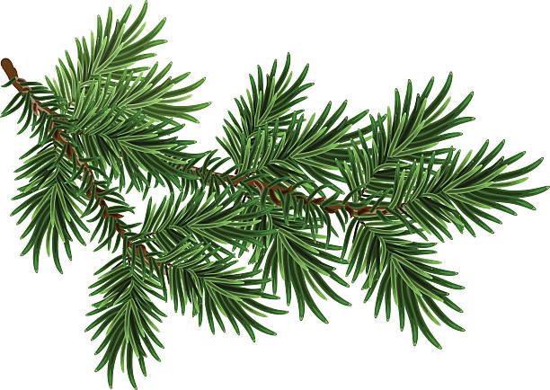 Fur-tree branch. Green fluffy pine branch Fur-tree branch. Green fluffy pine branch. Isolated on white vector illustration branch plant part stock illustrations