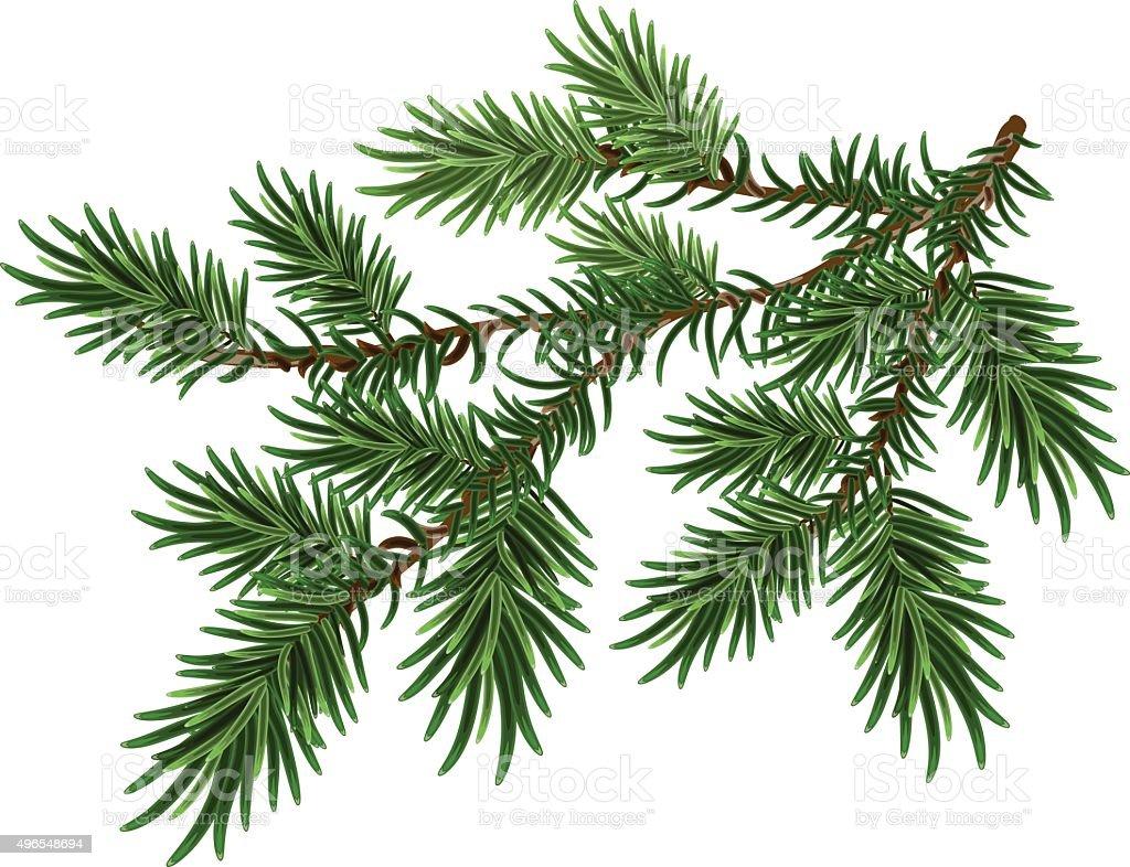 Fur-tree branch. Green fluffy pine branch vector art illustration