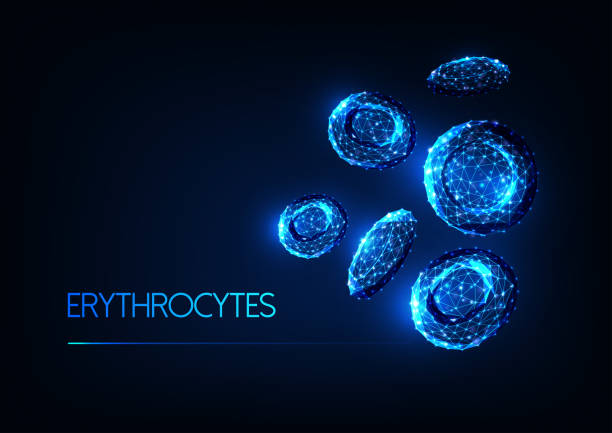 Futuristic glowing low polygonal red blood cells erythrocytes isolated on dark blue background. Futuristic glowing low polygonal red blood cells erythrocytes isolated on dark blue background. Blood testing, immunology concept. Modern wireframe design vector illustration. hemoglobin stock illustrations