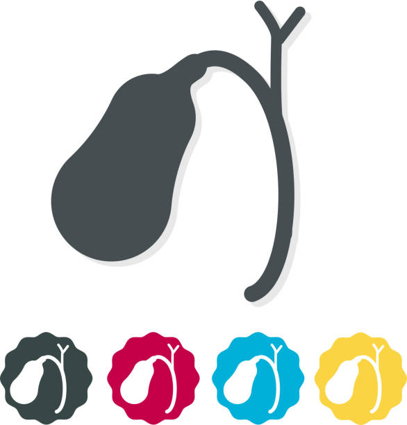 Gall Bladder Icon Gall Bladder Icon as EPS 10 file bile stock illustrations