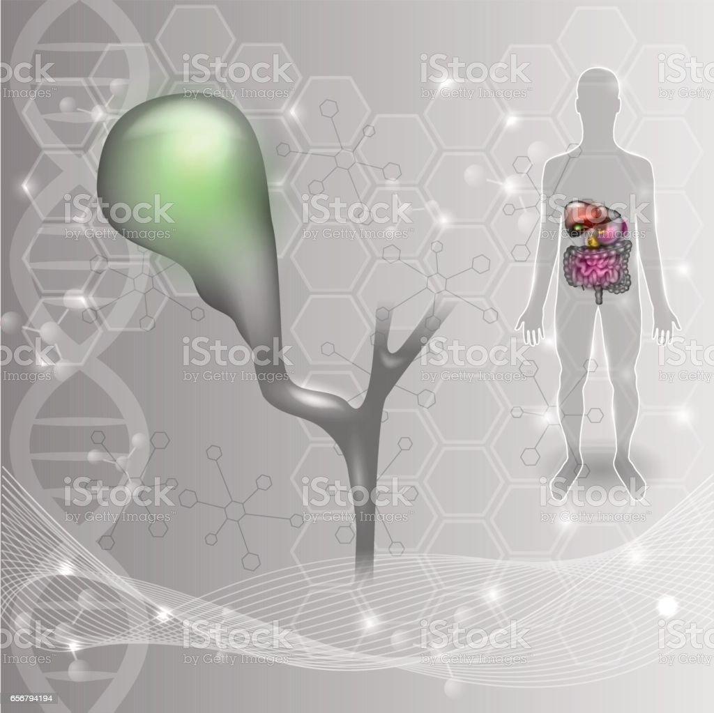 Vesícula Biliar - Arte vectorial de stock y más imágenes de ADN ...