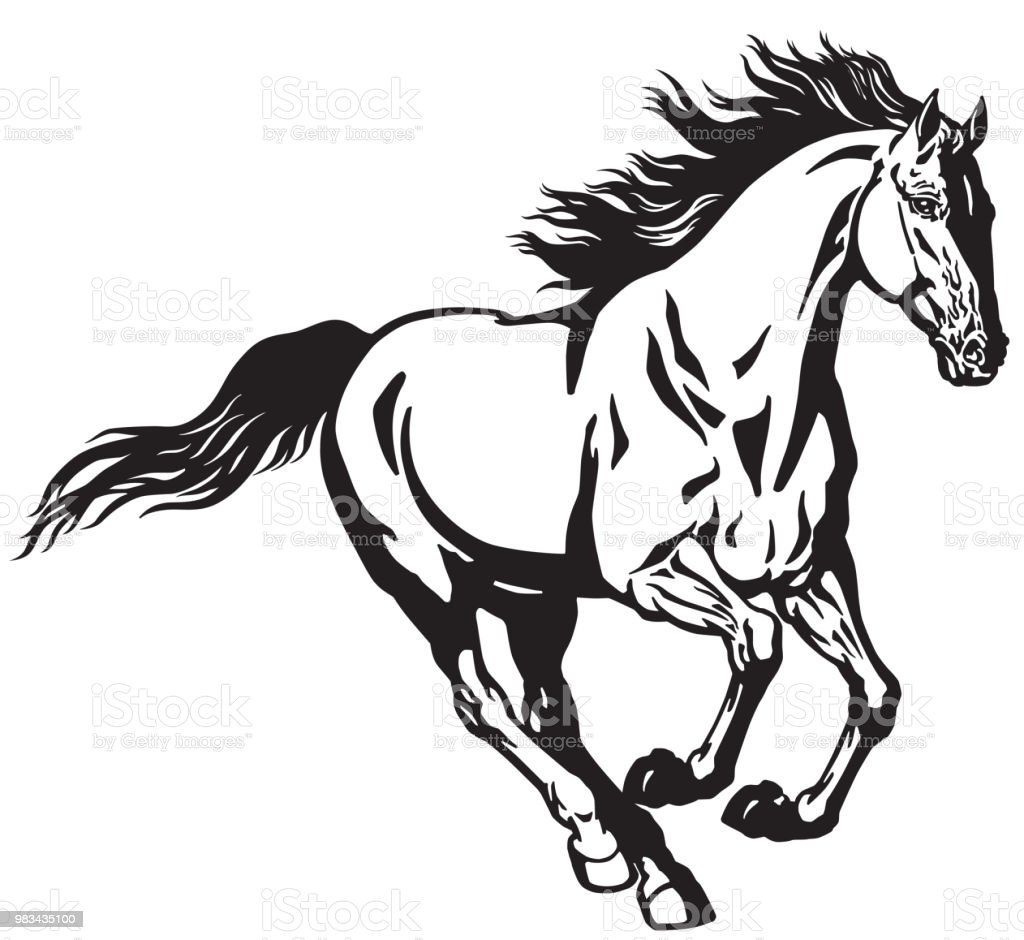 Galloping Horse Black And White Stock Illustration Download Image Now Istock
