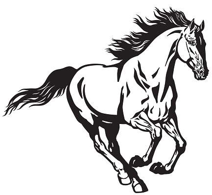 galloping horse black and white