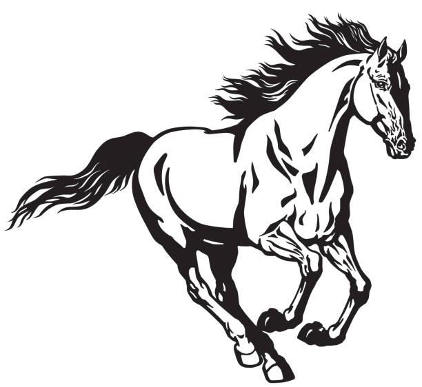 galloping horse black and white running stallion horse. Galloping wild pony mustang  .Black and white isolated  vector illustration stallion stock illustrations