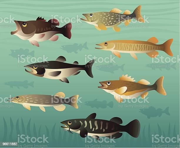 Game Fishes-vektorgrafik och fler bilder på Bass