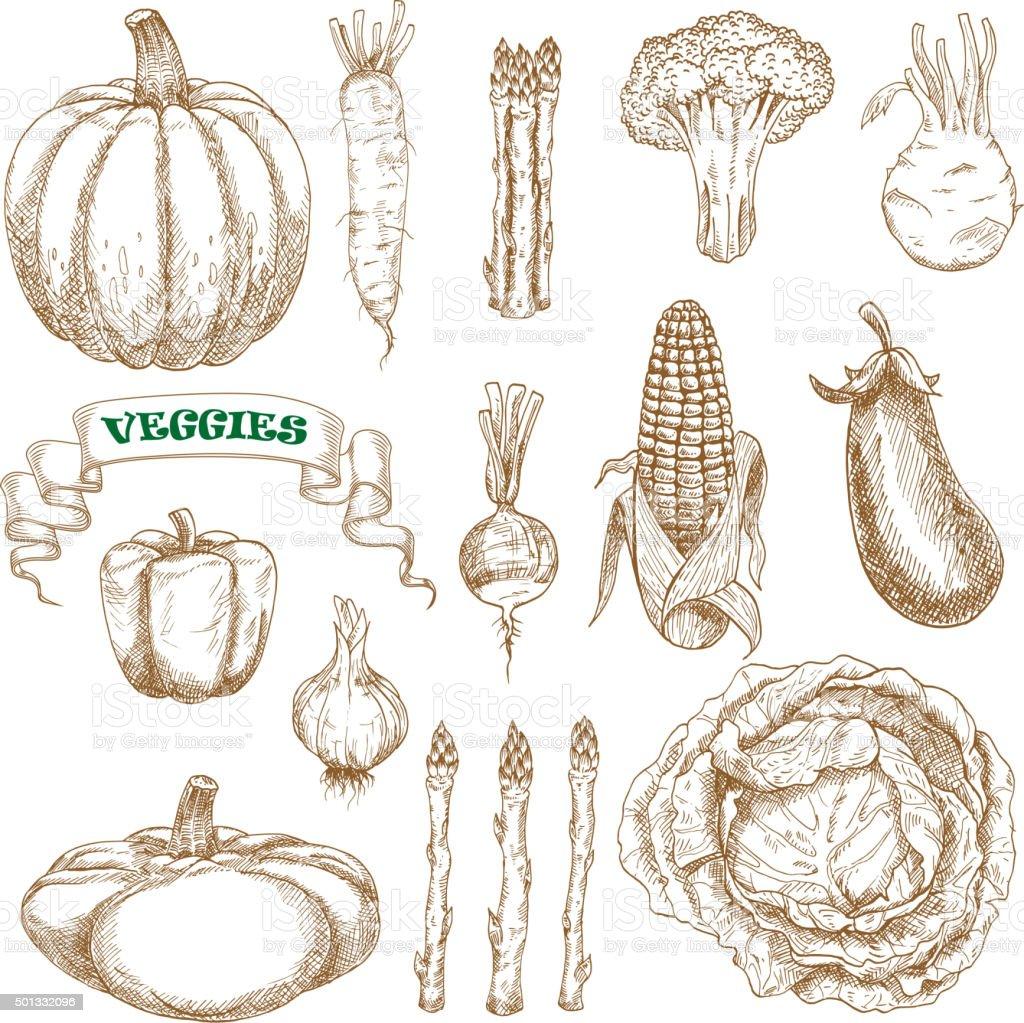 Garden and farm vegetables sketches set vector art illustration
