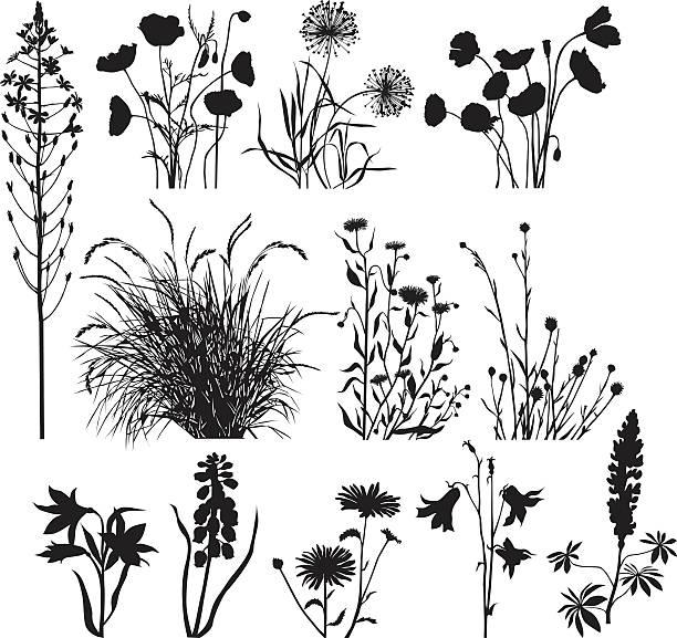 ilustrações, clipart, desenhos animados e ícones de jardim e plantas silvestres - papoula planta