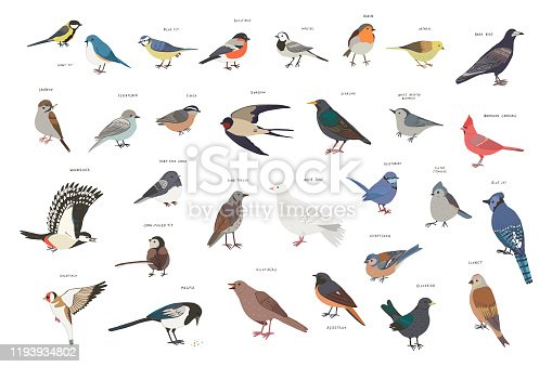 Common garden birds that you can see in the nature your backyard.