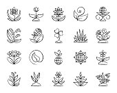 Garden charcoal icons set. Outline web sign kit of flower. Plant line icon collection includes chamomile, tulip, narcissus. Simple hand drawn garden symbol on white. Vector Illustration