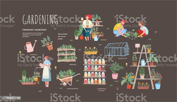 Garden flowers and plants at home and outdoorvector drawn of plants vector id1156550258?b=1&k=6&m=1156550258&s=612x612&h=9vbfamos08qhhquceiyxs 5i99ohesq45ka87cjbjvc=