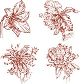 The vector drawing of a garden flowers in style of a skech.