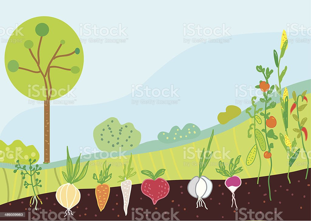 Garden in spring with vegetables vector art illustration