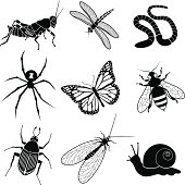 Vector icons of various garden insects and creatures: grasshopper, dragonfly, worm, black widow spider, monarch butterfly, honey bee, japanese beetle, green lacewing, and a snail.