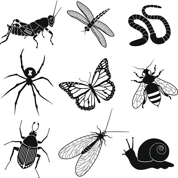 garden insects and creatures Vector icons of various garden insects and creatures: grasshopper, dragonfly, worm, black widow spider, monarch butterfly, honey bee, japanese beetle, green lacewing, and a snail. bee clipart stock illustrations