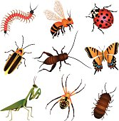 Vector illustrations of common garden insects and creatures: centipede, honey bee, ladybug, firefly, lightning bug, cricket, butterfly, swallowtail butterfly, praying mantis, spider, garden spider, roly poly, pill bug