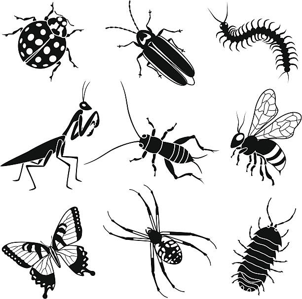garden insects Vector icons of common garden insects: ladybug, firefly or lightning bug, centipede, praying mantis, cricket, honey bee, tiger swallowtail butterfly, common garden spider, roly poly or pill bug. bee clipart stock illustrations