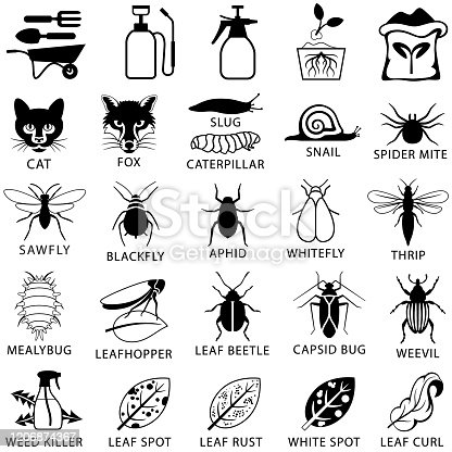 Single color icons of common garden pests and plant diseases. Isolated.