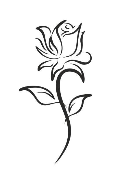 Best Single Rose Illustrations, Royalty-Free Vector Graphics & Clip Art - iStock