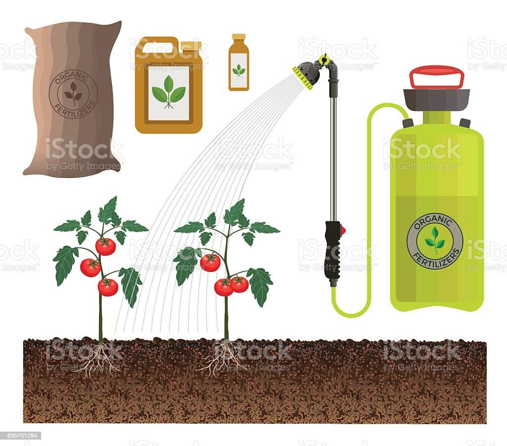 Garden sprayer fertilizes tomatoes royalty-free garden sprayer fertilizes tomatoes stock vector art & more images of agriculture