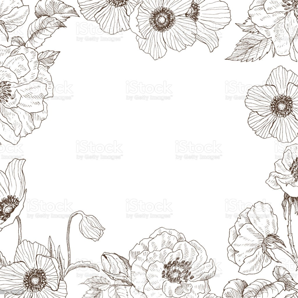 Garden tender roses and anemone frame. Vintage botanical hand drawn illustration. Spring flowers around of place for text royalty-free garden tender roses and anemone frame vintage botanical hand drawn illustration spring flowers around of place for text stock illustration - download image now