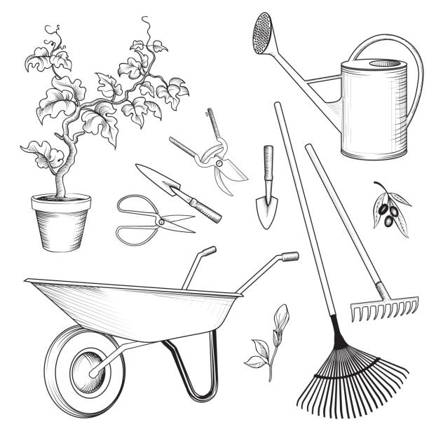 Garden tools set. Gardening plant, watering can, wheelbarrow, ra vector art illustration