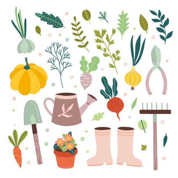 ilustrações de stock, clip art, desenhos animados e ícones de garden tools vector gardening equipment and cute farm elements and vegetables on white background - gardening