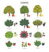Garden trees and shrubs collection.