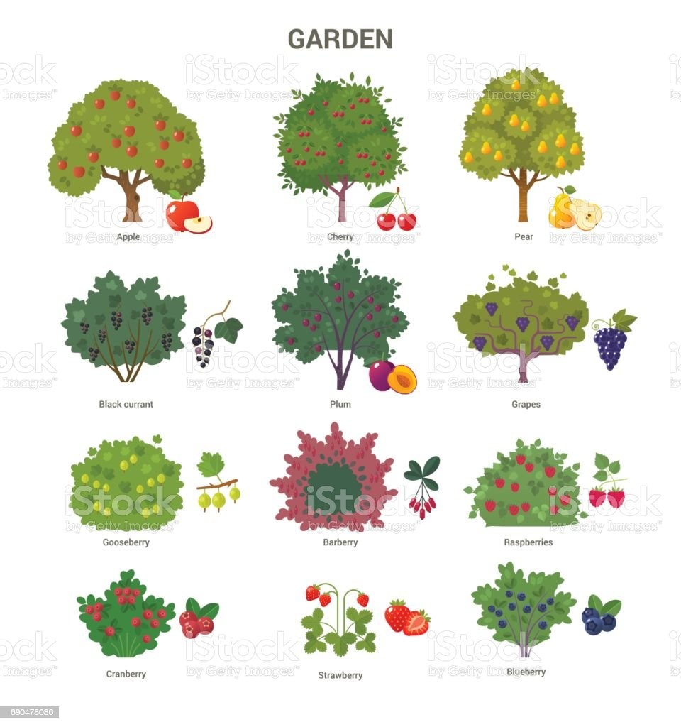Garden trees and shrubs collection. vector art illustration