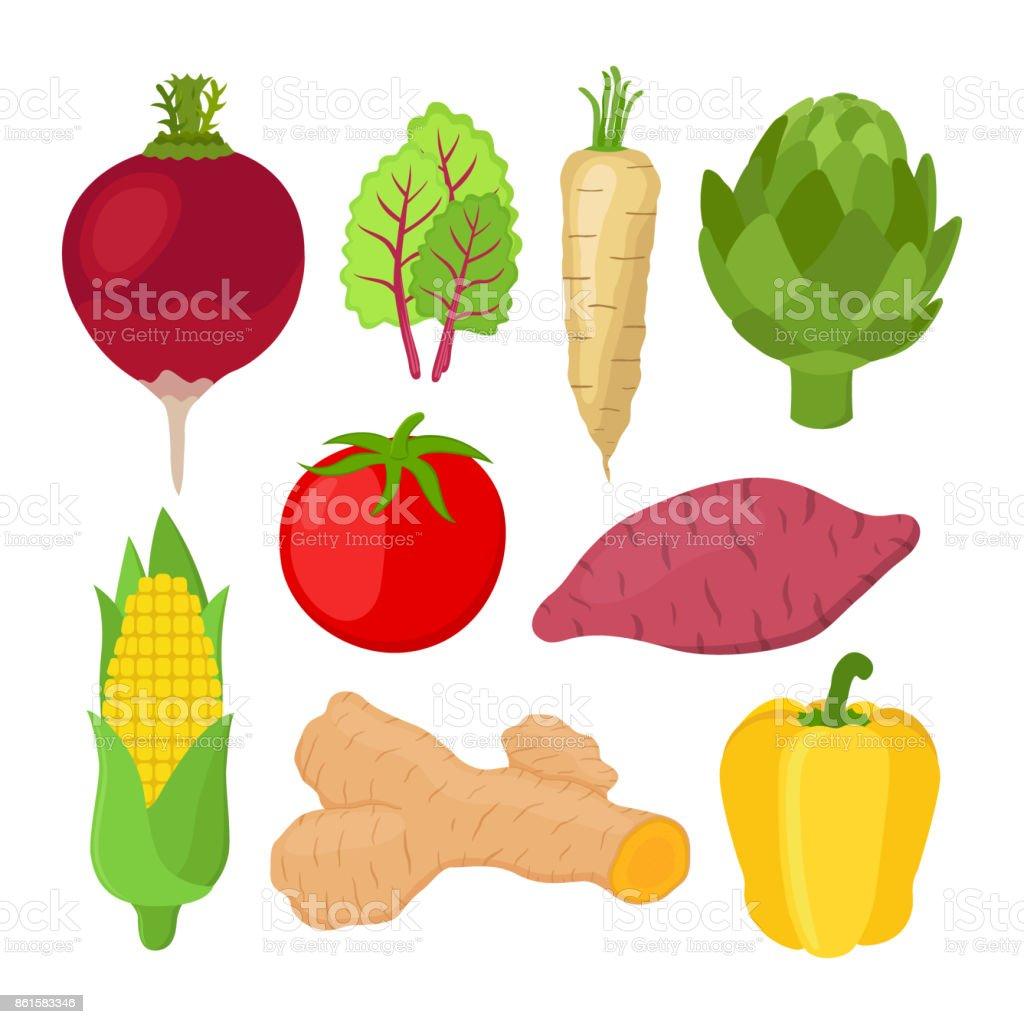 Garden vegetable set. Vegetarian nutrition. Cartoon flat style. Vector vector art illustration