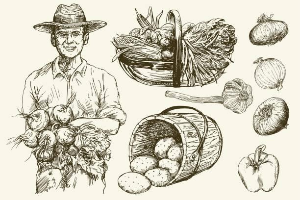 Gärtner, Korb mit geernteten Gemüse. – Vektorgrafik