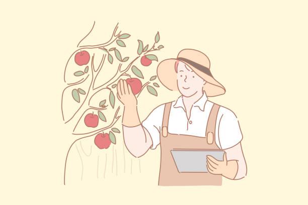 ilustrações de stock, clip art, desenhos animados e ícones de gardener harvesting apples concept - picking fruit
