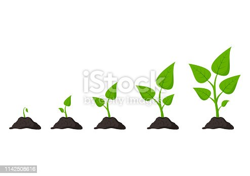 Gardening. Phases plant growing. Planting. Seeds sprout in ground. Infographic and evolution concept. Vector illustration