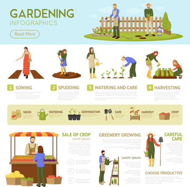 gardening Gardening infographics template with horticulture banner, information about stages of growing plants, sale of crop vector illustration gardening stock illustrations