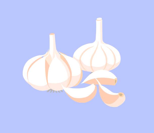 Garlic and garlic cloves isolated on blue background. Garlic and garlic cloves isolated on blue background. garlic stock illustrations