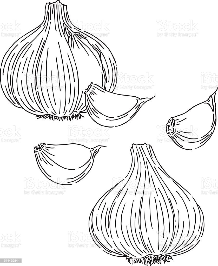 Garlic drawing stock vector art more images of black and for Black and white only