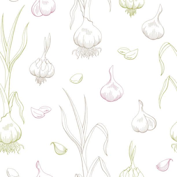 Garlic graphic color seamless pattern background sketch illustration vector Garlic graphic color seamless pattern background sketch illustration vector garlic stock illustrations