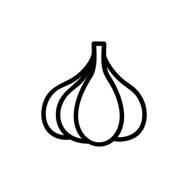 garlic icon vector. Isolated contour symbol illustration garlic icon vector. Thin line sign. Isolated contour symbol illustration crucifers stock illustrations